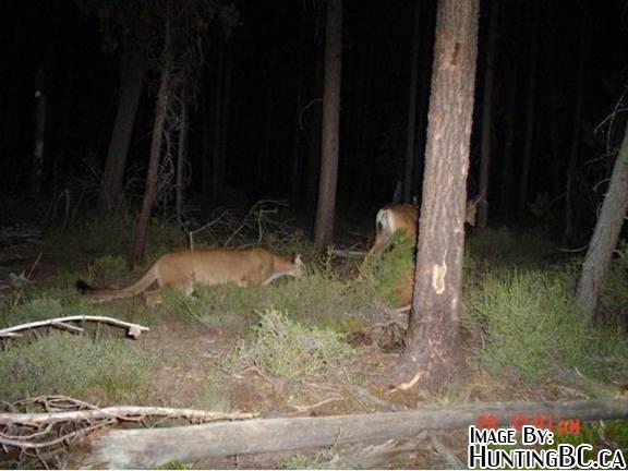 Surprising Trail Cam Picture